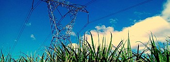 Beyond Electricity From Sugarcane